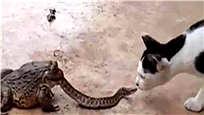 绝望!蛇被蟾蜍生吞一半仍与猫咪激战