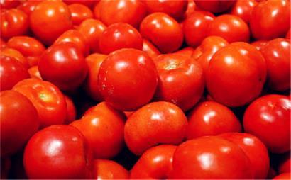 梦见许多西红柿红了