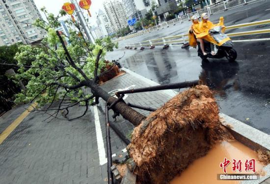 台风强袭福州121个航班被取消代理什么品牌净水器 仅俄航成功落地