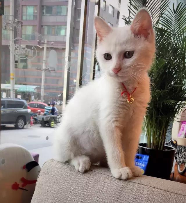 我的意思是,还有什么比依偎两只猫咪更美好的呢?
