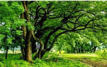 美成童话!开化这片彩色森林 来了就不想离开