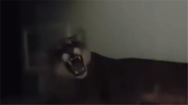 惊吓!狮子藏办公桌下 疑蹭空调
