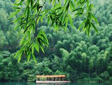 乡韵之《春天读诗》--竹海