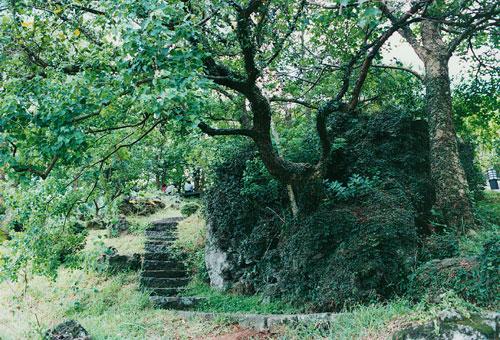 作为天堂雨林得珍贵宝石,它在森林的占有量显得尤其重要.