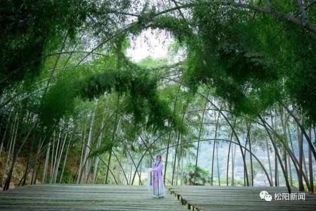 松阳苍翠欲滴的竹林里 藏着别样美丽剧场图片