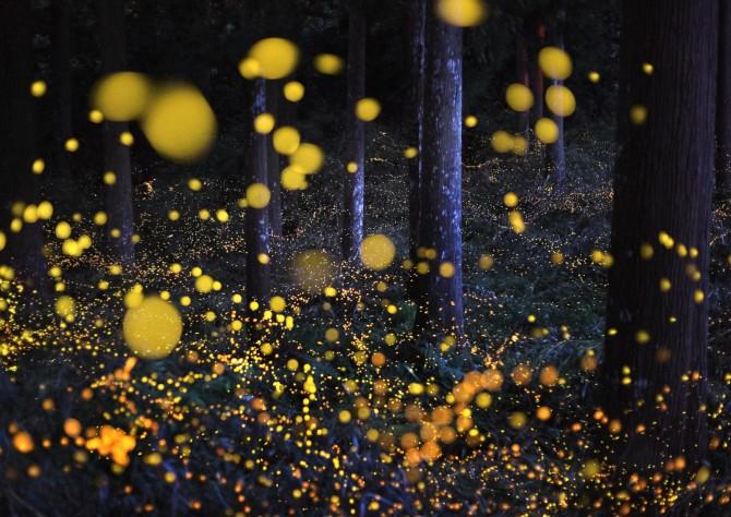 全球最美萤火虫观赏地 夜空中最亮的星