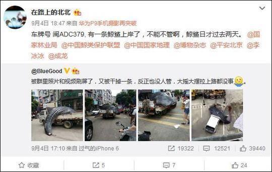 福建霞浦鲸鲨被当街宰杀 官方: