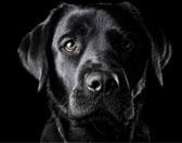 养宠物狗应每月驱虫