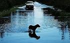 飓风中49只狗狗被遗弃,这些明星看不下去了