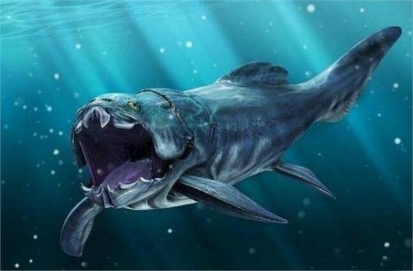 壁纸 动物 海洋动物 鱼 鱼类 桌面 600_394