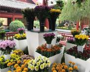 清明上河园国际菊展