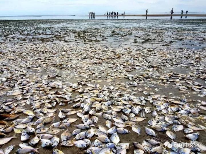 被冲上岸的海鲜泛滥成灾,泰国村民捡不过来(图)