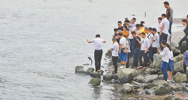 别去深圳湾钓鱼,非法的!