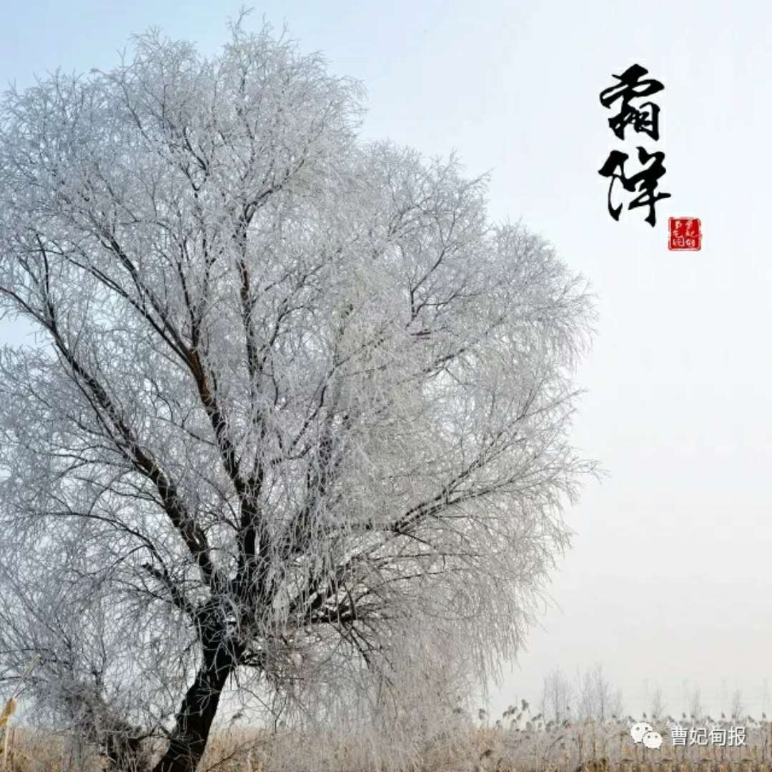 曹妃甸版二十四节气图 风景美如山水画