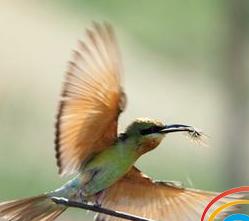 五源河湿地公园首现最美小鸟蜂虎 来看长啥样?