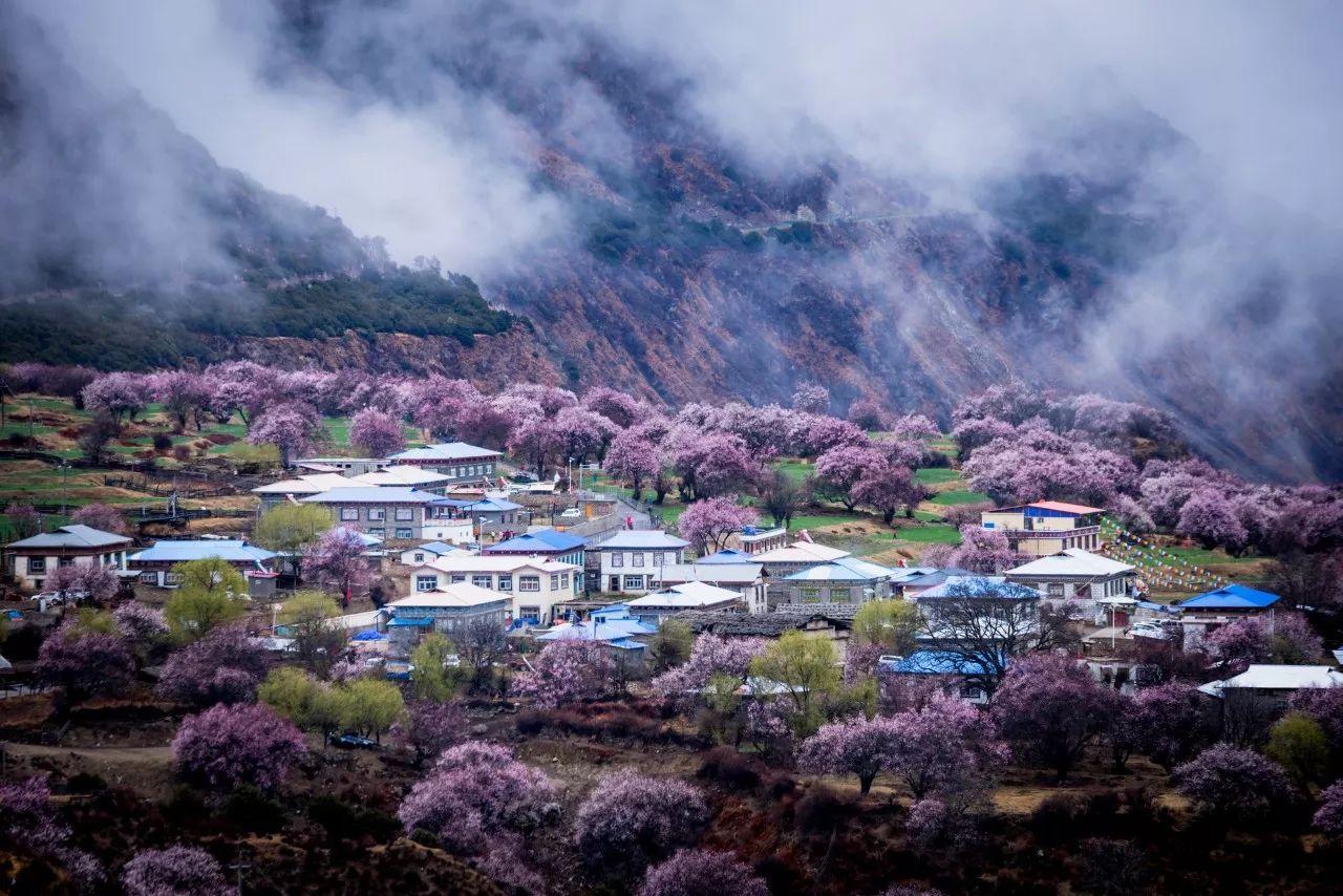 """林芝是""""西藏江南"""",林芝桃花则是西藏最温柔的那一面."""
