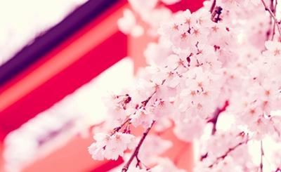 今年不用错过樱花的浪漫 4千+让你体验商务舱游日本