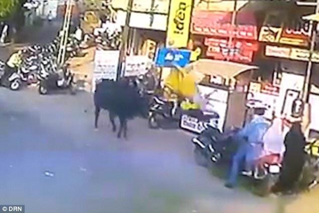 印度女子被牛顶屁股撞飞 凌空翻转360度