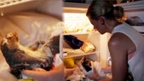 """死亡动物""""复活者"""" 这位女士家的冰箱里藏满动物尸体"""
