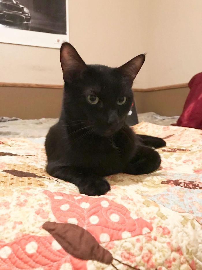 黑猫走失5年 主人猛然发现它一直住在邻居家里