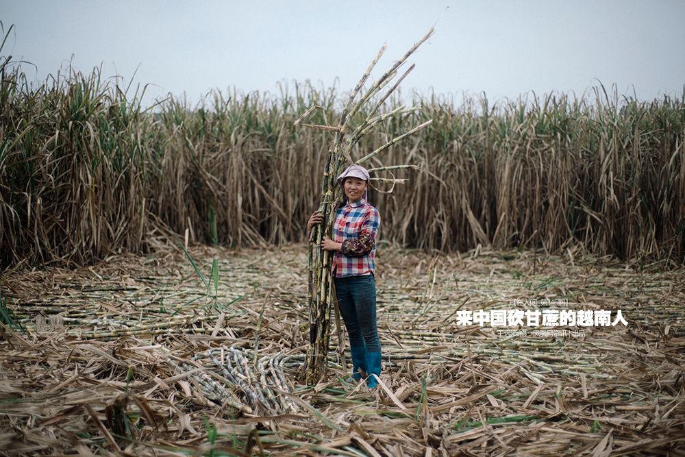 在人间第145期:来中国砍甘蔗的越南人