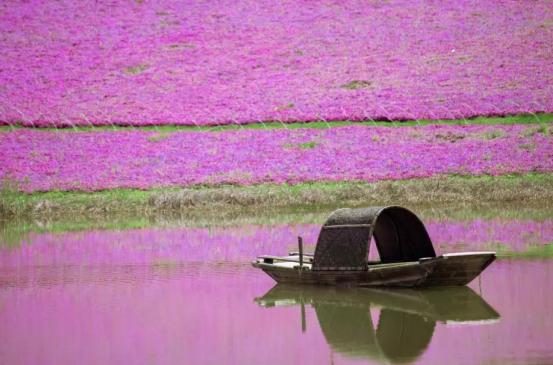 春季山里 • 江南有你 ——摄影作品征集