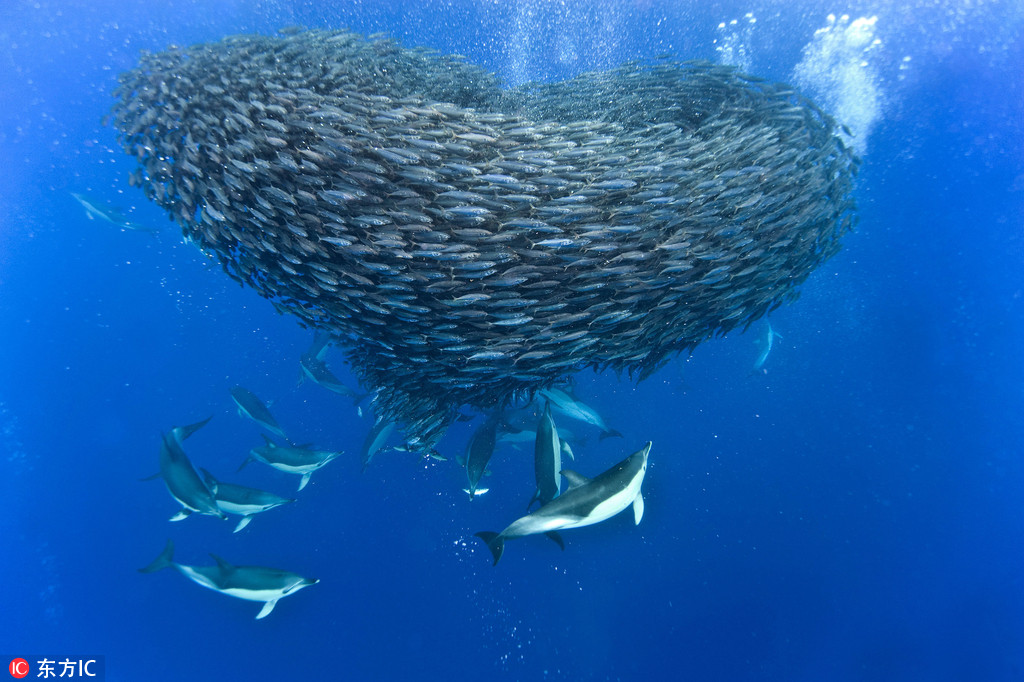 """海底奇观""""鱼卷风""""图片 场面震撼霸气"""