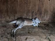 动物园游客扔石头砸袋鼠致1死1伤