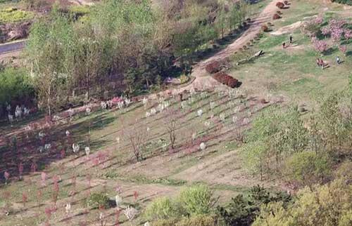 孔望山南麓桃花树下