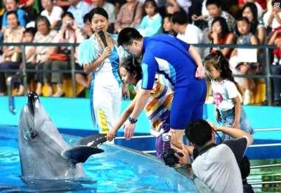 扬州极地海洋世界的海豚表演现场.