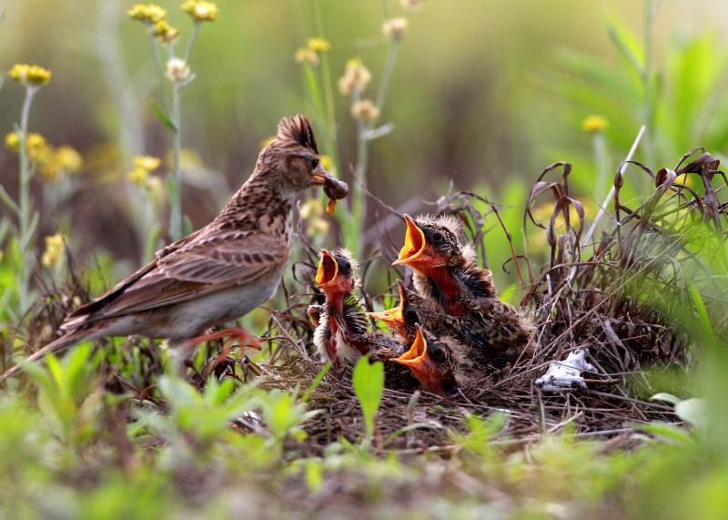 2018宁波杭州湾国家湿地公园观鸟节开幕