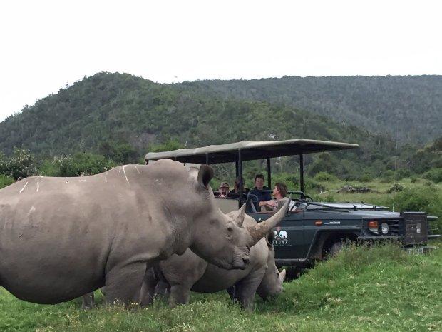大快人心!盗猎者偷猎犀牛时 被狮群咬死啃食