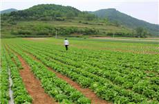 通过直达冷藏车 太白县高山蔬菜48小时运达香港