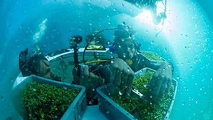 """意大利""""海底农场""""探索农业新方向"""