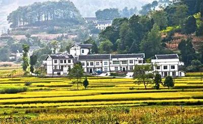 重庆市合川区发展村级集体经济初见成效