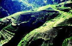 承包期内不得强行收回农业转移人口的承包林地