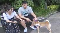 男子抱娃在小区遛狗竟莫名遭殴打 对方称:我打的就是养狗的!