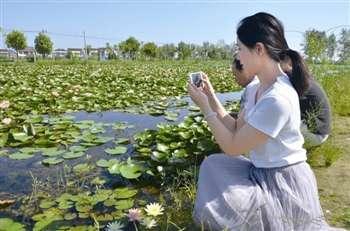 """大马村打造""""荷韵莲香""""水生植物园"""