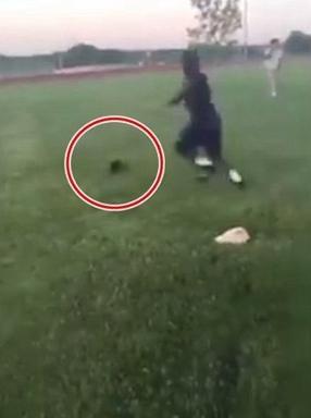 黑猫被踢至空中坠亡 踢猫青年被起诉