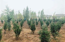 西安鄠邑区违建土地植树面积逾15万平方米