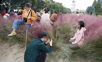 種三年的網紅花海僅三天被毀