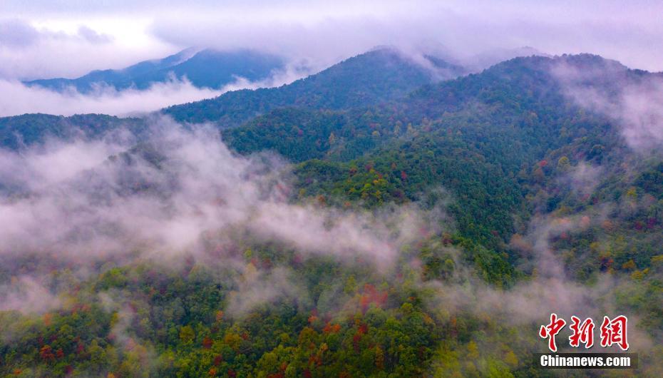 航拍新余仰天岗国家森林公园 秋日森林层林浸染
