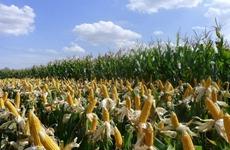 杨凌:创新驱动 抢占农业高新技术制高点