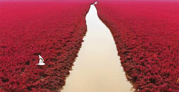 红遍全球的《鸟瞰中国》来了!在半空重新发现大美中国