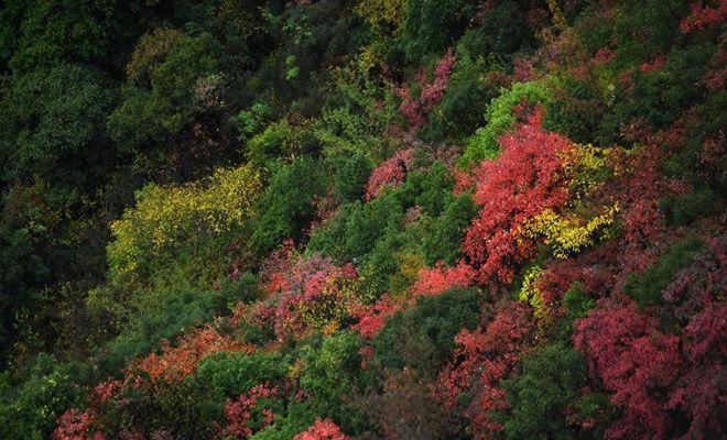 三峡库区巫山神女景区漫山树叶五彩斑斓