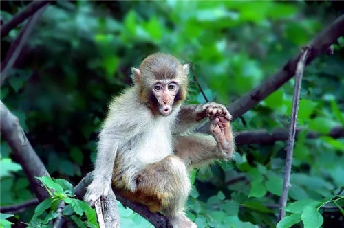 快看云台山 1000多只猴子来巡山啦