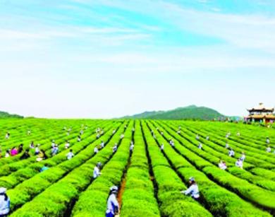 農業產業振興助推鄉村振興
