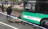 突发!小男孩被卷入公交车下,拖行10多米