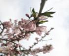 中國·寧陵:一年好景君須記 最是轆轤桃花開