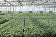 渭南:告别粗放式农耕 科技为农业插上腾飞翅膀